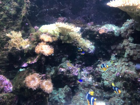 Image of the inside of a coral reef aquarium