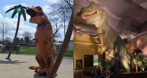 Person in costume imitates T.rex