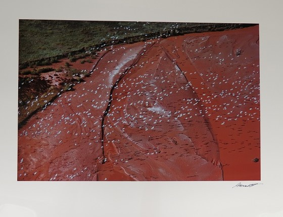 Painting Of A Birds-eye-view Of Cranes Flying Over A River, White Dots Against Red Textured Earth