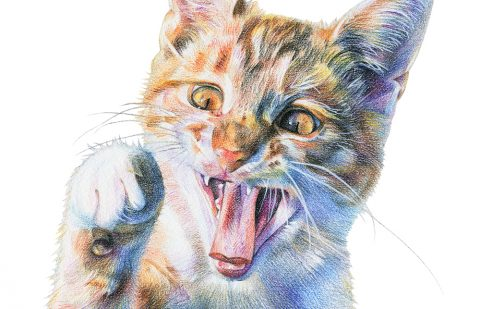 Colored pencil drawing a of cat