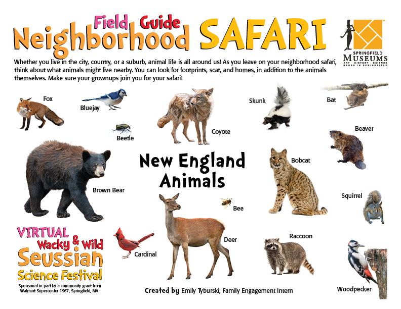 Field Guide Neighborhood Safari