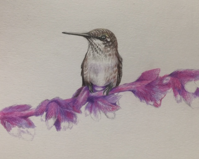Birds And Botanicals In Colored Pencil