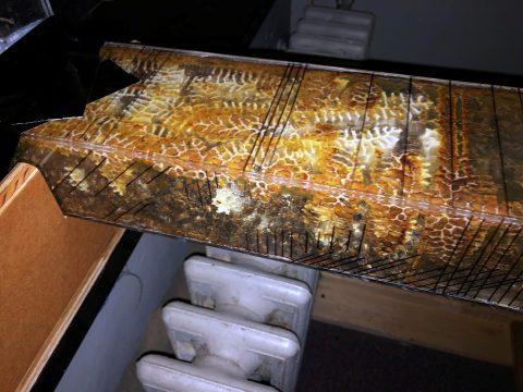 Active honey bee hive