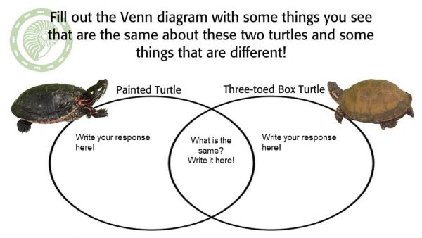 Yertle The Turtle Program Pack Page